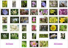 38 Fleurs de Bach