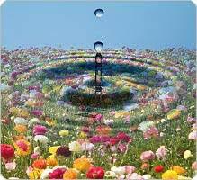 De l'eau aux fleurs de Bach