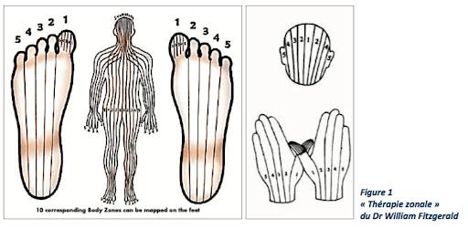 Réflexologie plantaire, méthode thérapeutique qui utilise le processus d'autoguérison naturel du corps. Formé depuis 8 ans O les pieds en est un expert.